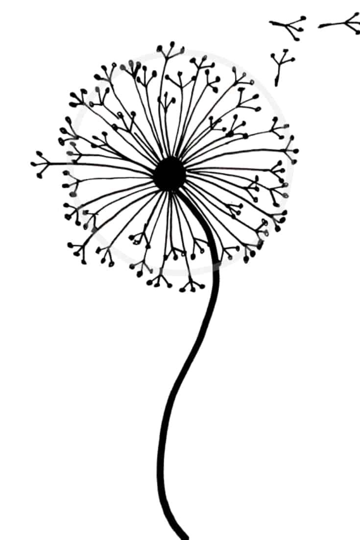 Dandelion drawing tutorial