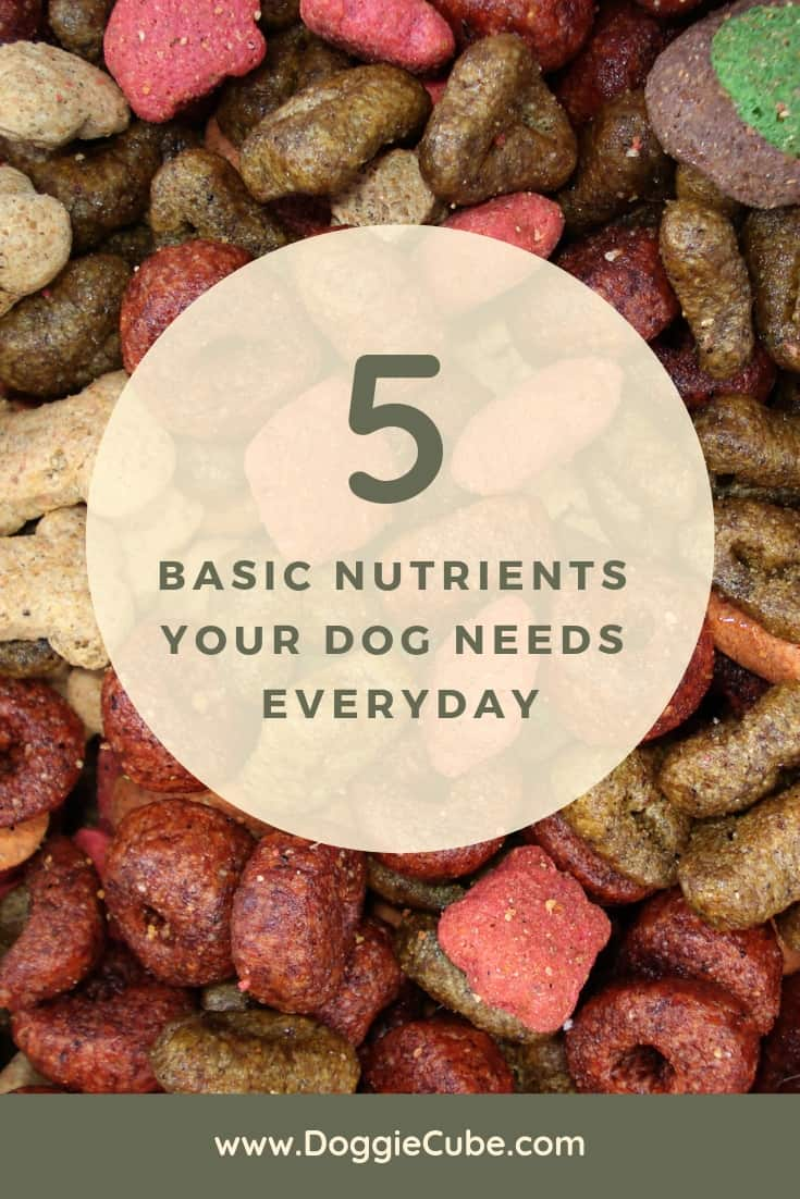 5 Basic nutrients your dog needs everyday