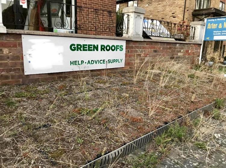 green roof maintenance needed