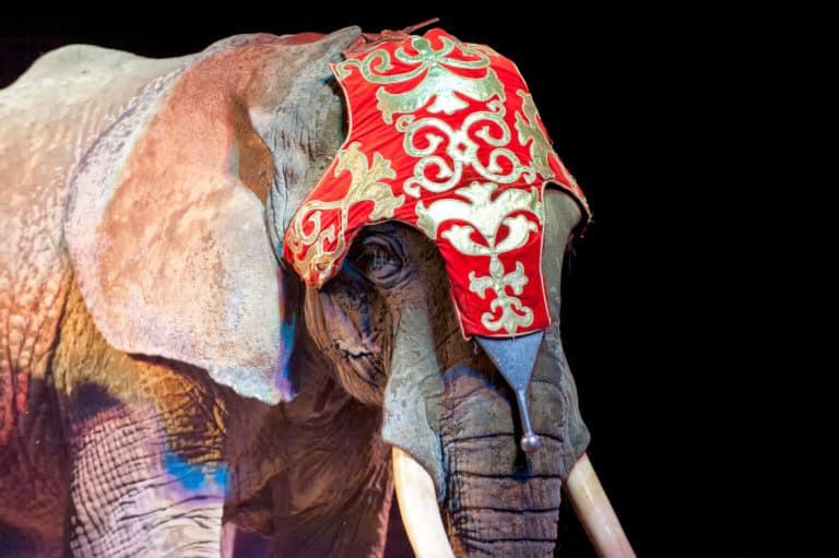 cirkus zloraba živali extraveganza