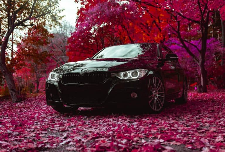 black car in a rose forest