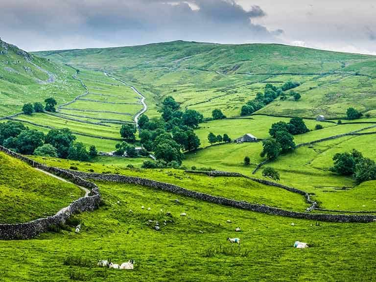 Stone walls crisscrossing farmland in the Yorkshire Dales