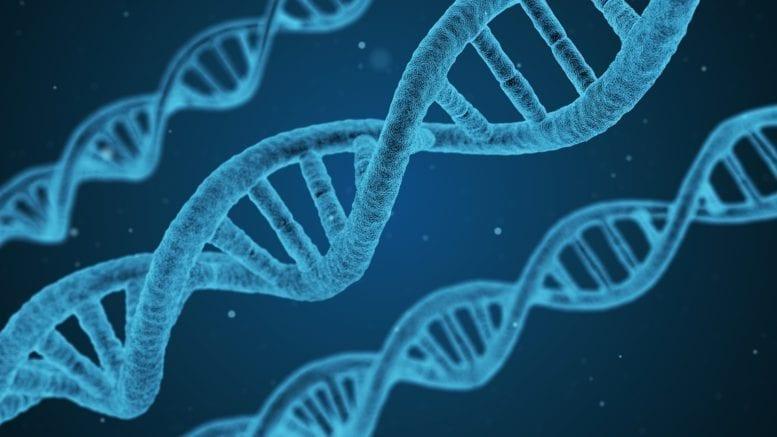 gene translation