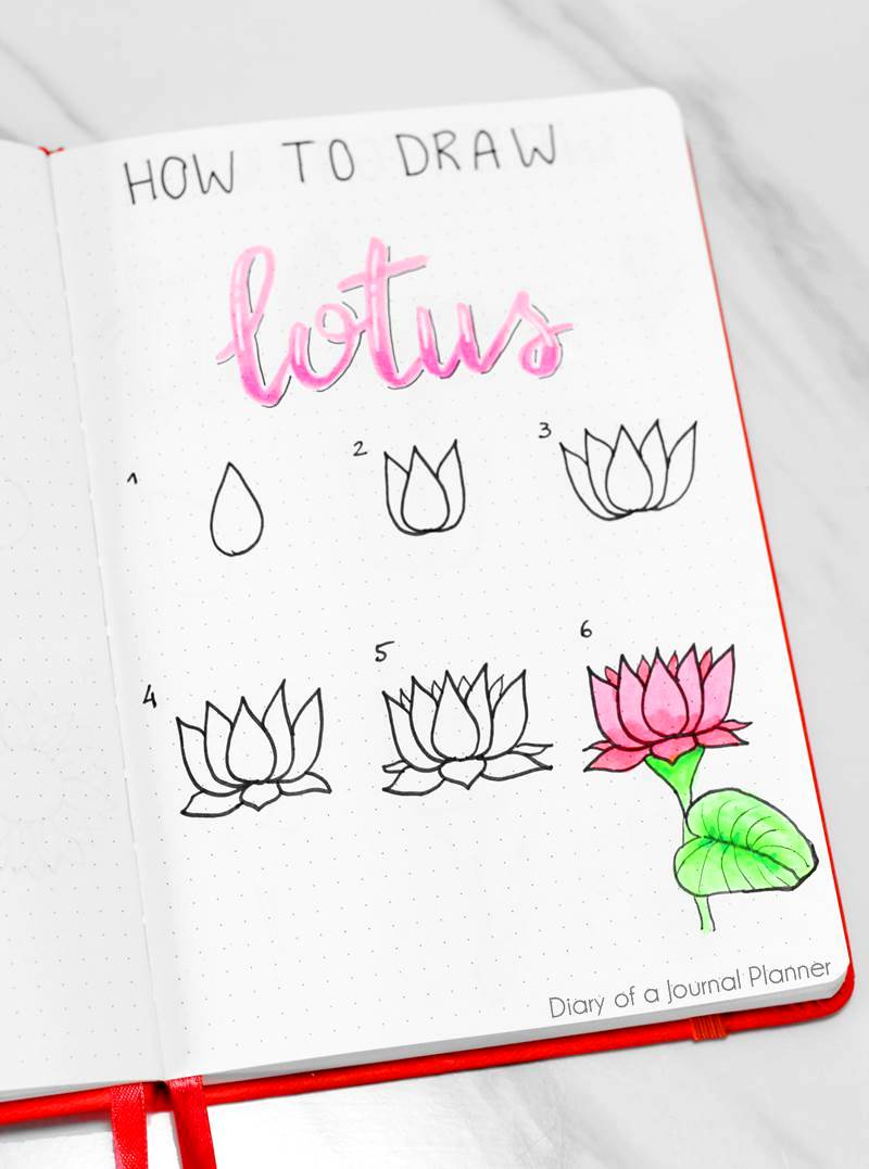 50 Best Flower Drawing Tutorials To Embellish Your Pages