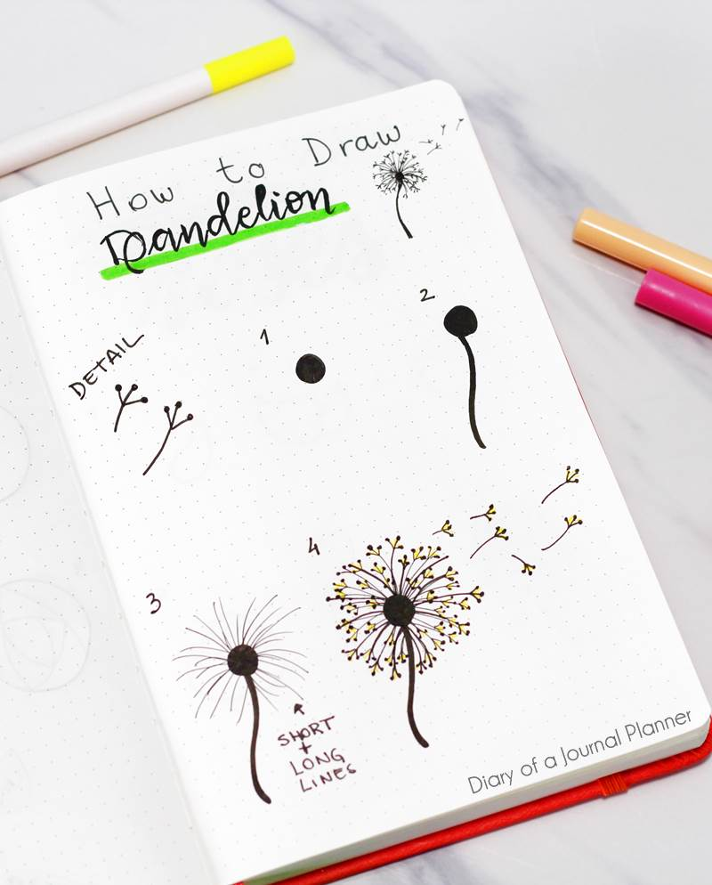 How to draw a dandelion drawing
