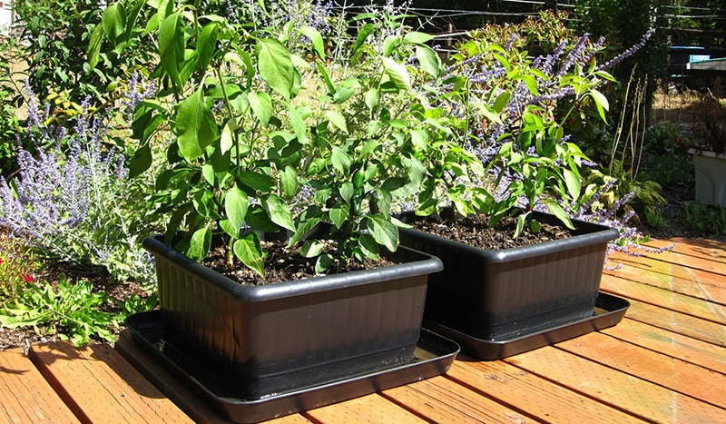 Container Gardening Secrets Ideas To Inspiration