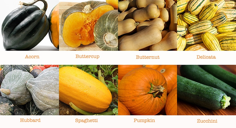 Growing Squash How To Plant Grow Harvest And Store