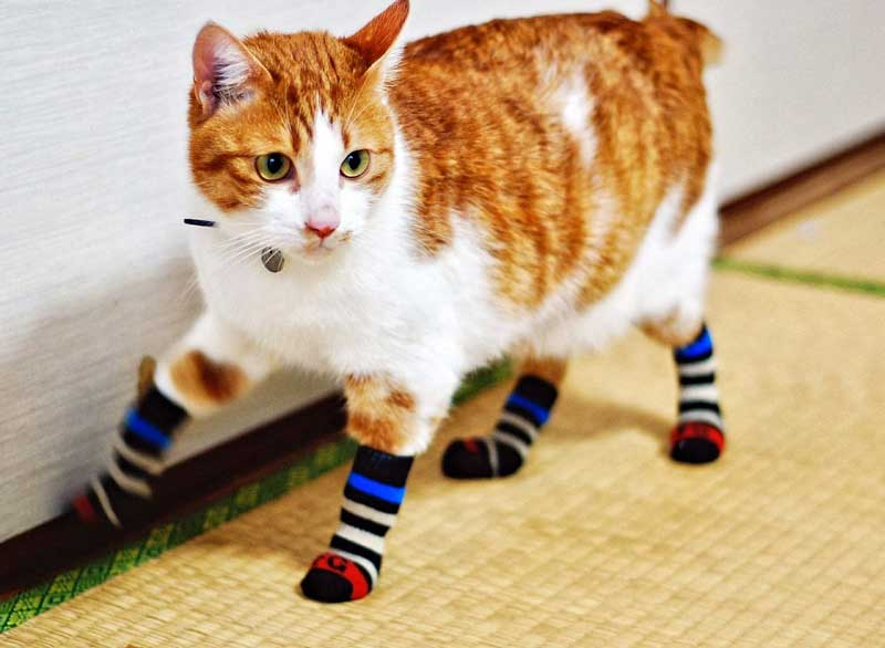 cat with socks
