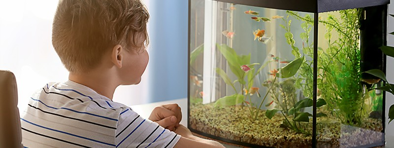 Best Aquarium Heaters - Reviews & Buyer's Guide