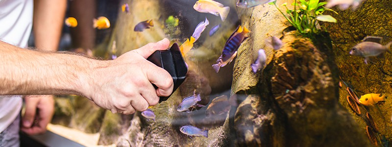 how-often-should-you-clean-your-fish-tank