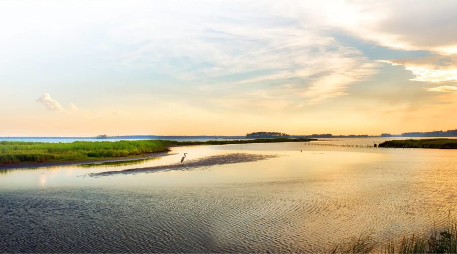 Remedial Investigation of Anacostia River Sediments