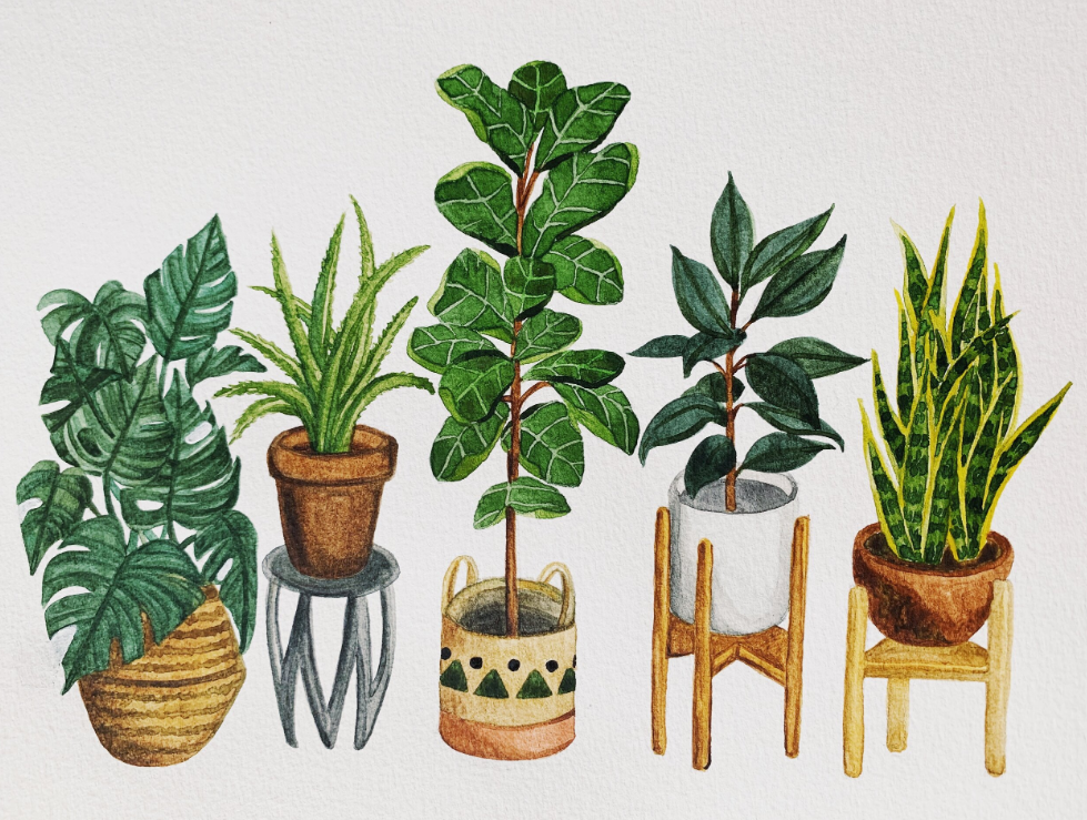 Watercolor painting of green house plants