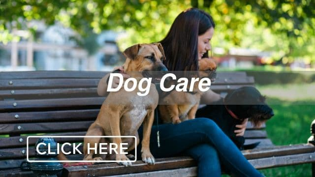 Dog Care Category
