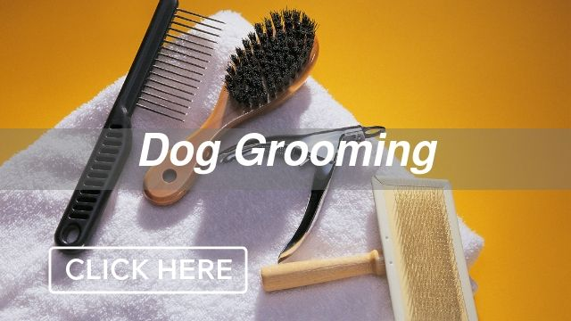 Dog Grooming Category