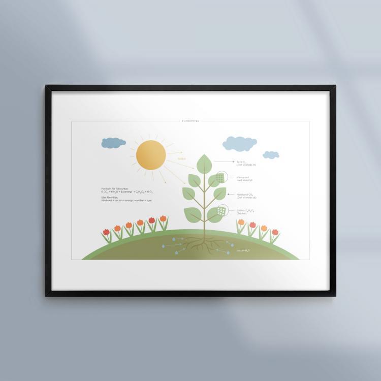 Kunskapsposter-Tavla-Biologi-Fotosyntes-NO-Ram