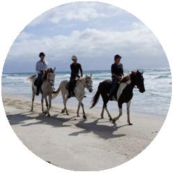 Ride the pure white sands of Pakiri Beach