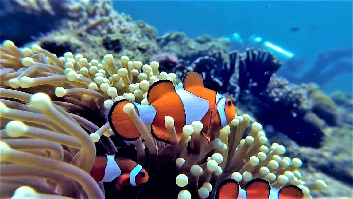 Cape Kri - Raja Ampat, Indonesia