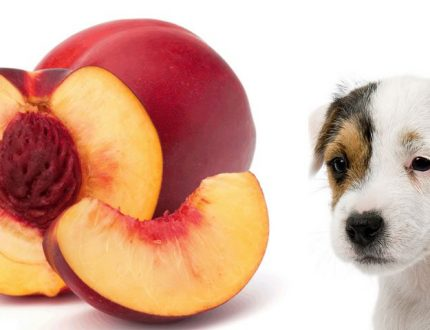 Can I Give my Dogs Nectarines? Can Dogs Eat Nectarines?