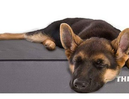 The 8 Best Dog Beds for German Shepherds
