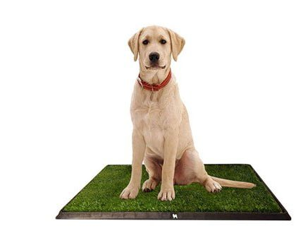 The Best Indoor Dog Potty