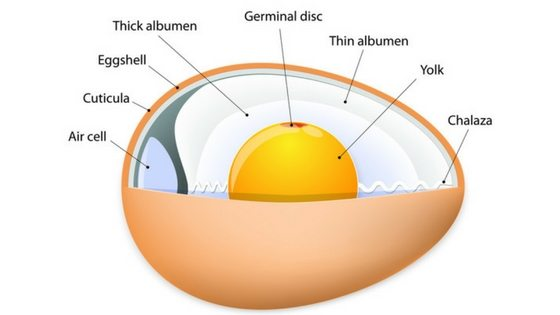 Do Eggs Go Bad? Here's What You Need To Know!