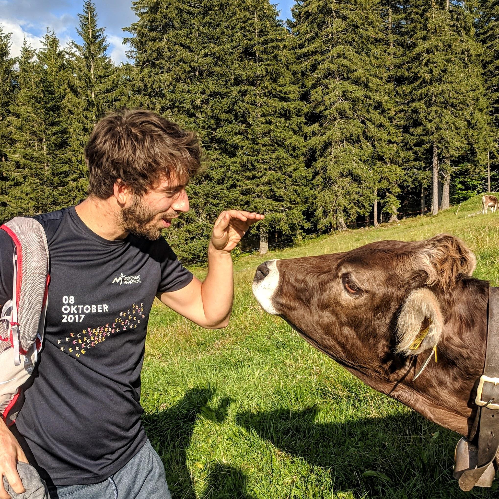 dva cow