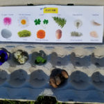 How to Create Fun Nature Treasure Hunts Using Egg Cartons