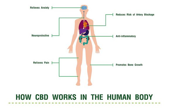 How Does CBD Work?