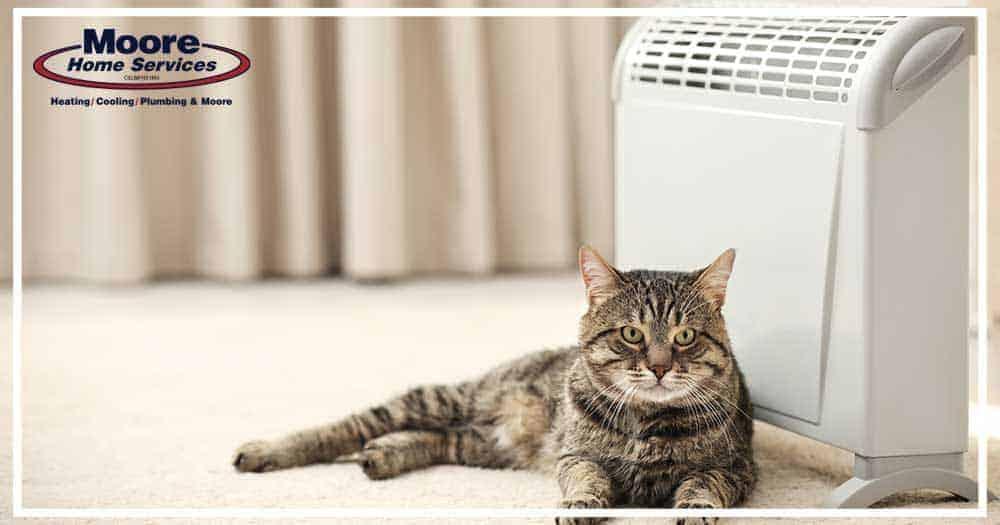 Cat Space Heater