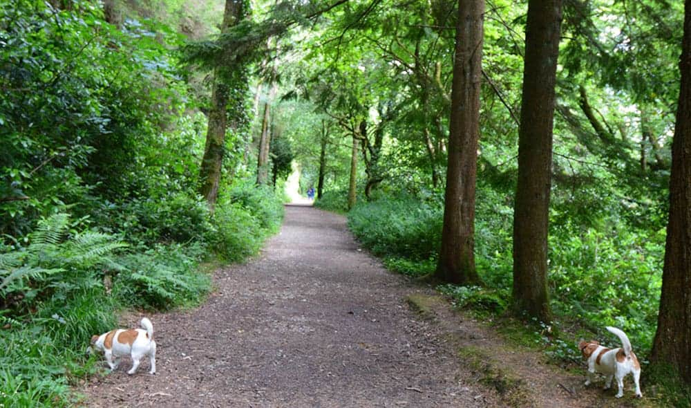 A Woodland Walk at Ballysaggartmore Towers, Lismore, Co. Waterford - The Irish Place