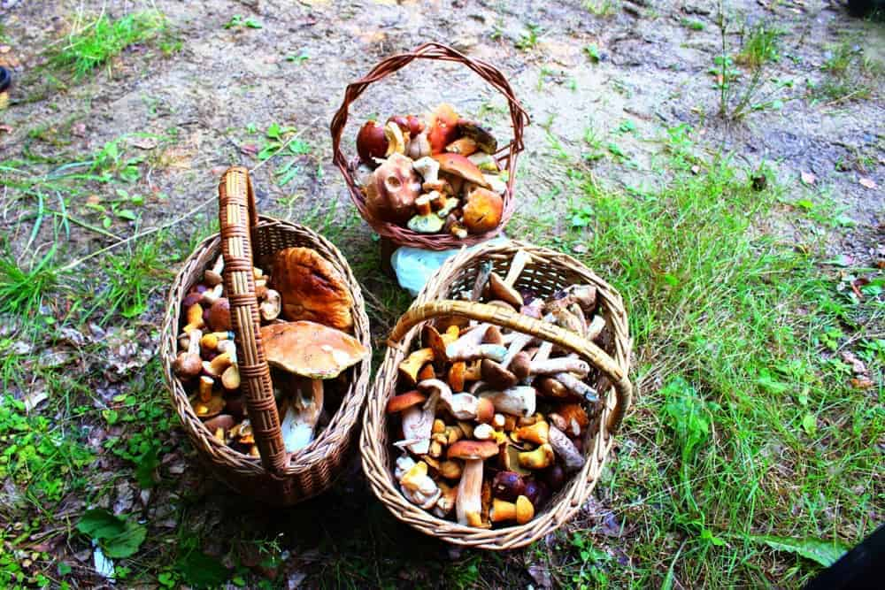 Mushroom hunting - the best summer activity in Czechia!