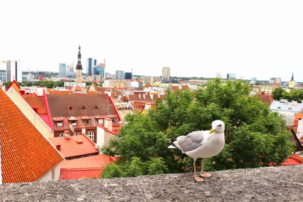 Kohtuotsa view point in Tallinn