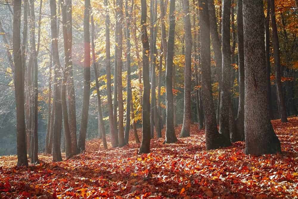 Fall Photography in the forest