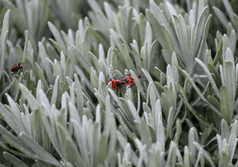 Common Bugs that Attack Succulents