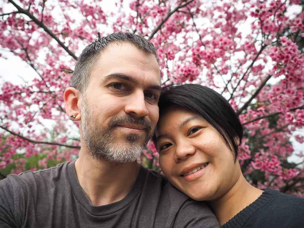 Taipei cherry blossoms