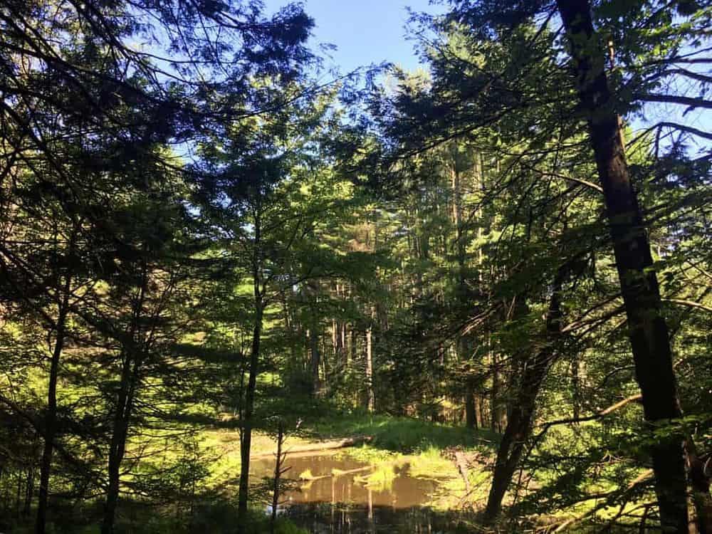sinnemahoning state park wetlands viewing area