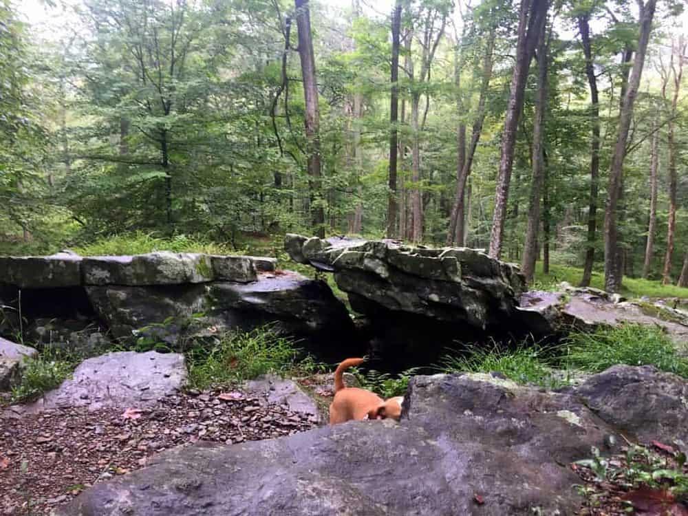 Hazel hiding in Cunningham Falls State Park