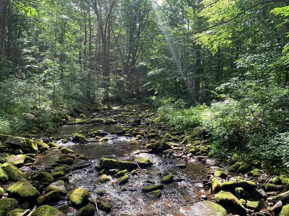 ravensburg state park creek