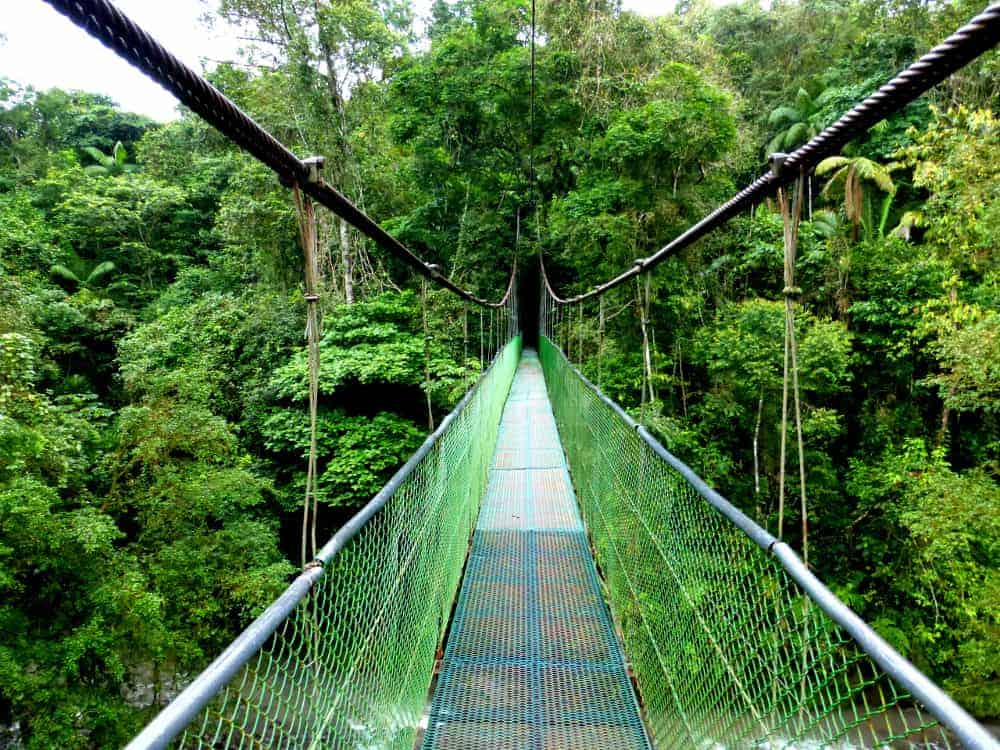 Suspension Bridge in Costa Rica Rain Forest