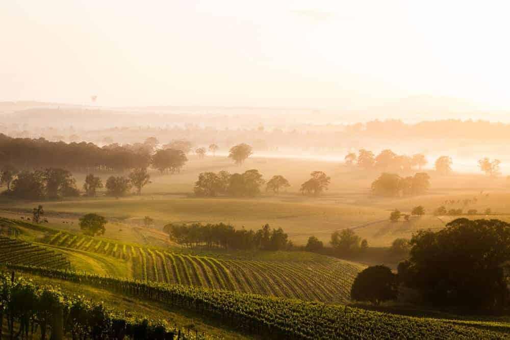 Australian Shiraz Vineyard | Hunter Valley, Australia