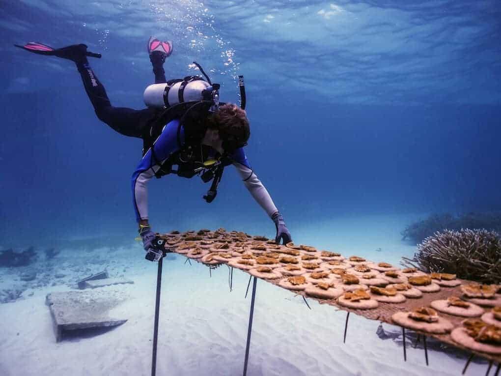 Coral Reef Nursery in Puntacana