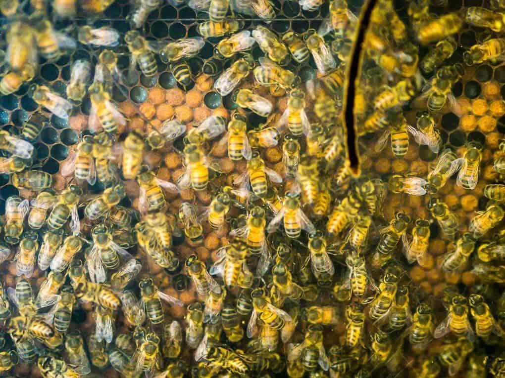 Puntacana Forest Bee Honey