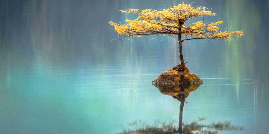 Zen mindfulness muziek.jpg