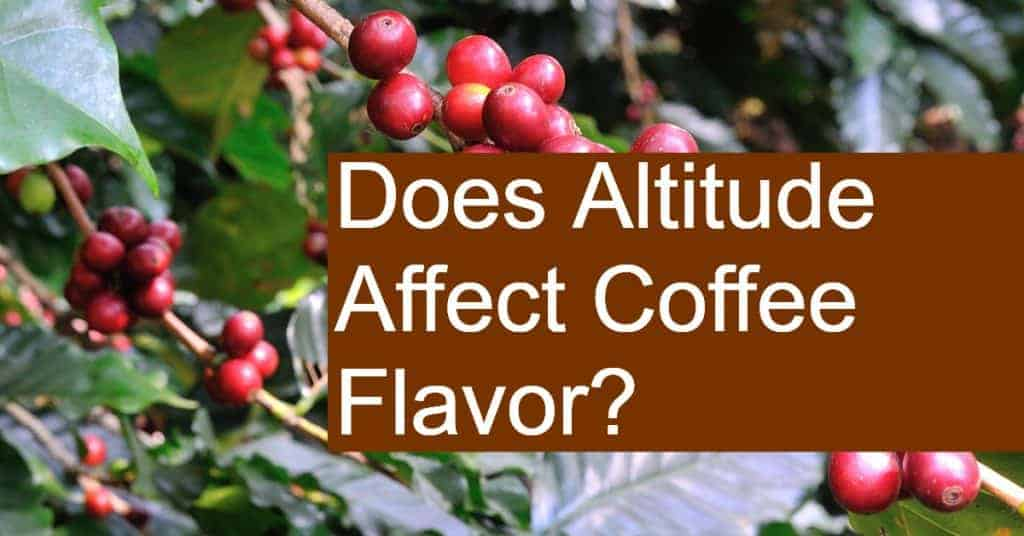 Does Altitude Affect Coffee Flavor?