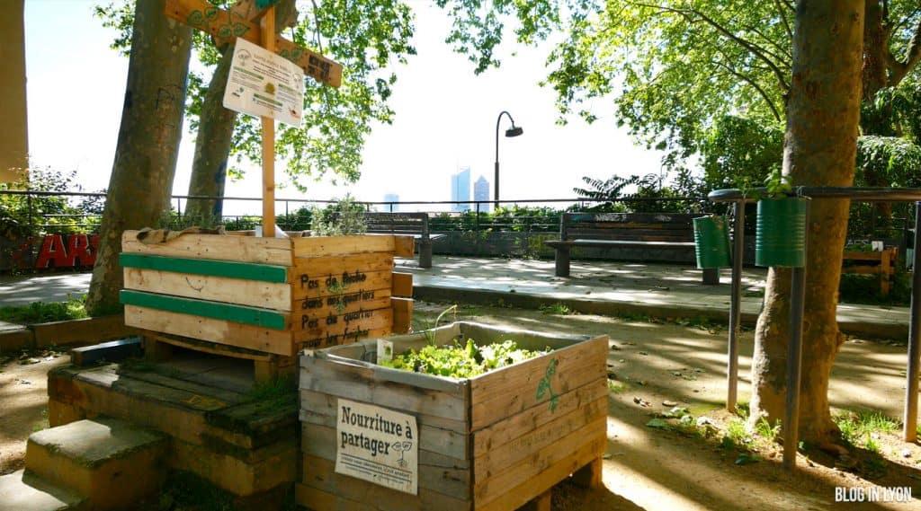 L'agriculture urbaine à Lyon | Blog In Lyon - Webzine Lyonnais
