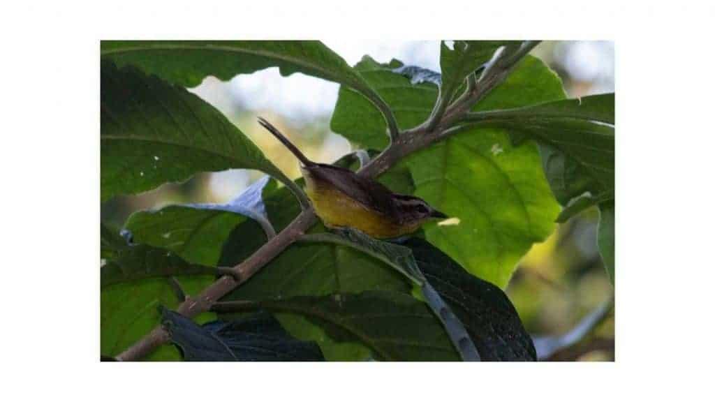 bird feed for small birds