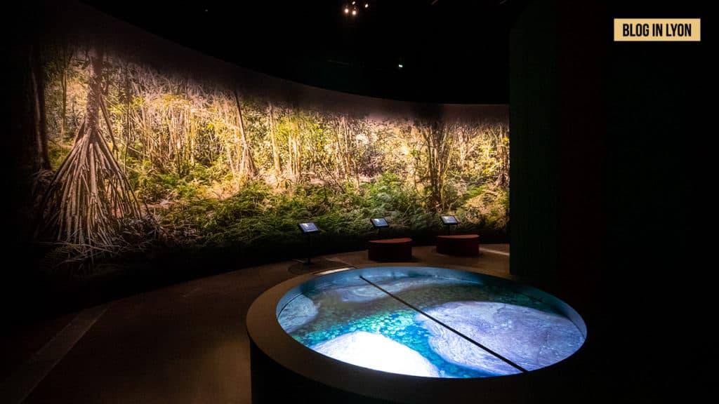 Un refuge en terre malgache - Musée des Confluences   Blog In Lyon