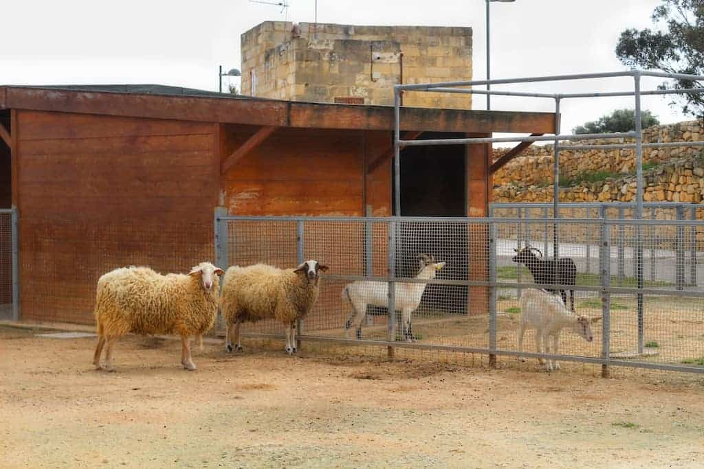 Sant'Antnin Family Park zoo animals sheep