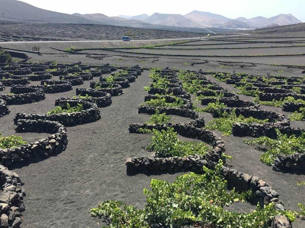 Wines of Spain: Lanzarote