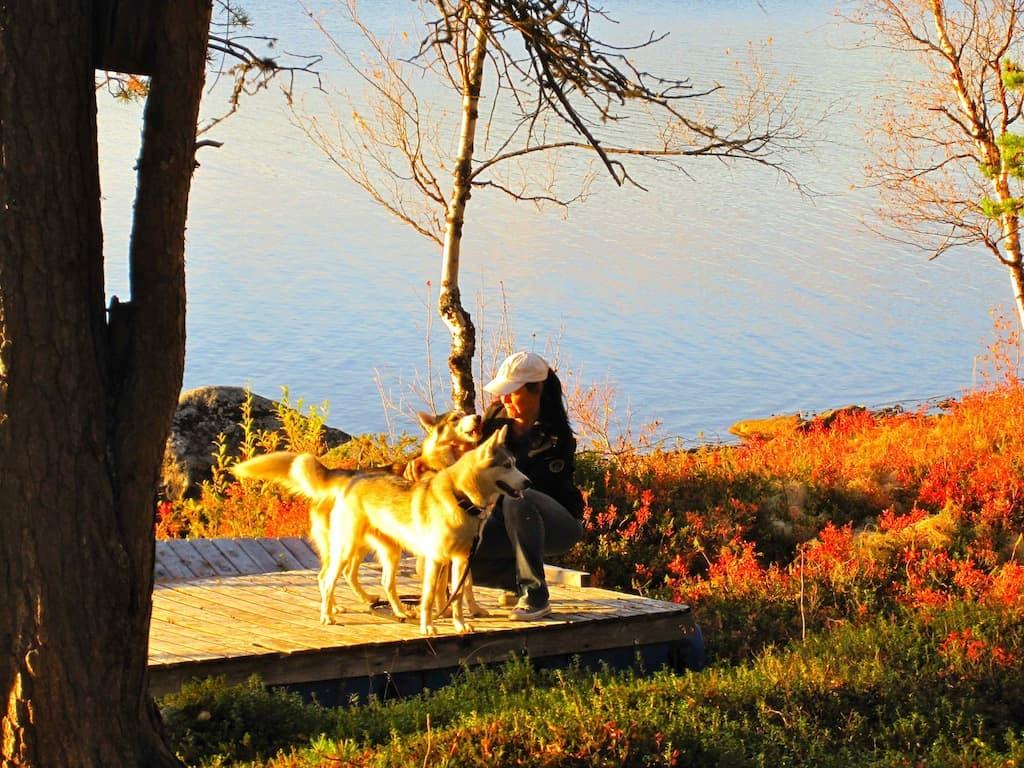 Neues Leben in Lappland: Marion mit ihren Huskys